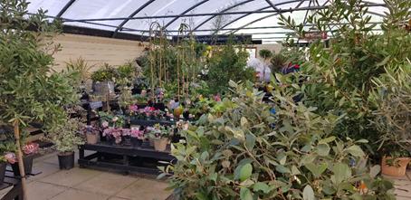 Plant sales at Goldcliff Garden Centre